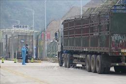 Dịch COVID-19: Nhiều xe nông sản đang chờ làm thủ tục tại cửa khẩu