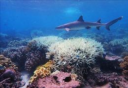 'Làm sáng mây'để cứu quần thể san hô Great Barrier