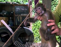 Phòng, chống buôn bán động vật hoang dã - Bài 2: Vẫn còn hạn chế trong thực thi