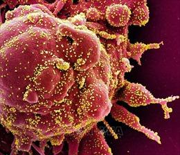 WHO cảnh báo virus SARS-CoV-2 sẽ không bao giờ biến mất