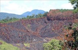 Kỷ luật khiển trách ba cán bộ liên quan vụ cháy rừng tại Kon Tum