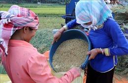 Nâng cao chất lượng đời sống người dân theo hướng nông thôn mới và nông thôn kiểu mẫu