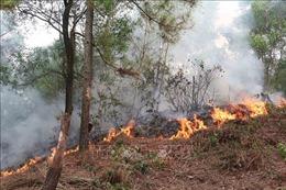 Đám cháy rừng tại khu vực núi Con Voi (Nghệ An) lan rộng