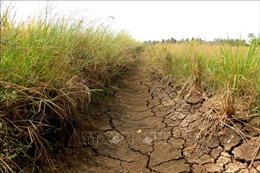 Bảo đảm công khai, minh bạch trong chuyển mục đích sử dụng đất trồng lúa tỉnh Long An