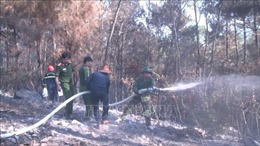 Khống chế đám cháy thực bì rừng thông ở Thanh Hóa
