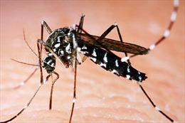 Số ca mắc và tử vong vì bệnh sốt xuất huyết tại Lào tiếp tục tăng