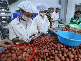 Xuất khẩu nông sản Việt - Bài 1: Dấu chân trên bản đồ thế giới