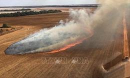Nỗ lực khống chế hỏa hoạn tại vùng đầm lầy lớn nhất thế giới
