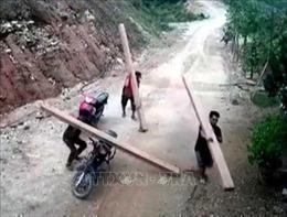 'Lâm tặc'ngang nhiên phá rừng phòng hộ ở Quảng Ngãi