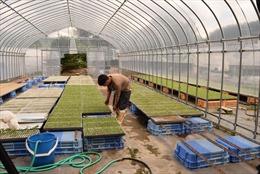 Lao động châu Á tại Nhật Bản -Bài 1: Đông Nam Á - nguồn cung lao động quan trọng