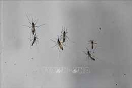 Phát hiện mới về hệ miễn dịch của loài muỗi giúp chống bệnh sốt rét