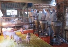 Bảo đảm thống nhất trong xử phạt vi phạm hành chính đối với lĩnh vực chăn nuôi