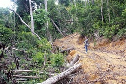 Vụ phá rừng giáp ranh tại Phú Yên: Khởi tố thêm 12 bị can