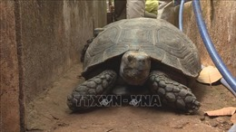 Khởi tố đối tượng nuôi nhốt trên 100 con rùa quý hiếm