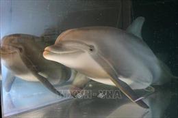 Cá heo robot giống y như cá thật, giá 26 triệu USD