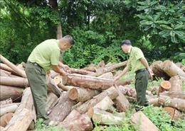 Xử lý nghiêm việc khai thác rừng trái phép tại huyện Định Hóa, Thái Nguyên