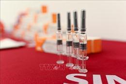 Đâu là những nước đầu tiên nhận được vaccine phòng COVID-19 của WHO?