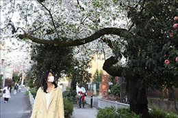 Kẻ phá hoại 'giấc mơ'của ngành du lịch Nhật Bản