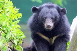 Một người bị thương nặng do gấu rừng tấn công