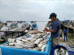 Bán cá 'chạy bão' tại Khánh Hòa