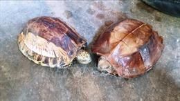 Phát hiện xe khách chở 207 con rùa không rõ nguồn gốc xuất xứ