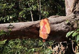 Vùng lõi rừng đặc dụng Mường Phăng bị 'rút ruột', hệ lụy khó lường