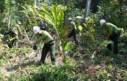 Kiên quyết không chuyển đổi sử dụng rừng tự nhiên sang mục đích khác