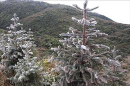 Băng tuyết phủ kín nhiều nơi trên Cao nguyên đá Đồng Văn