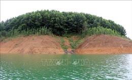 Nhiều bất cập trong trồng rừng thay thế