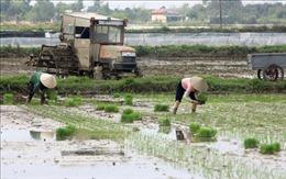 Các tỉnh phía Bắc kết thúc gieo cấy vụ Đông Xuân trong tháng 2