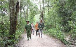 Linh động nhiều biện pháp giữ rừng