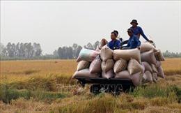 Diện mạo mới của Gò Quao khi đạt huyện nông thôn mới