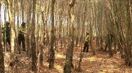 Đồng Tháp có 3 khu vực dự báo cháy rừng ở cấp cực kỳ nguy hiểm