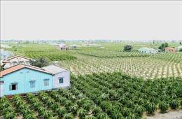 Tiền Giang đầu tư trên 4.000 tỷ đồng xây dựng nông thôn mới