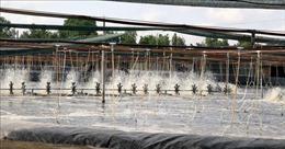 Khuyến khích nuôi thủy sản công nghiệp trên diện rộng