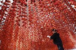 Lâm Đồng cho phép chuyển đổi mục đích sử dụng đất để làm du lịch canh nông