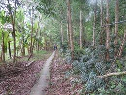 Mưa to liên tiếp, hơn 44.500 ha rừng ở Cà Mau thoát hiểm hỏa hoạn