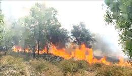 Cháy rừng nghiêm trọng ở ven biển Quảng Bình