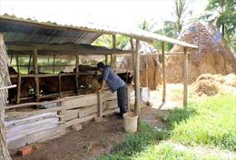 Chăn nuôi bò - 'cần câu cơm' của nông dân Sóc Trăng