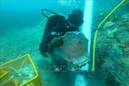 Singapore phát hiện 2 xác tàu đắm cổ chở đầy gốm sứ