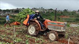 'Nghẽn' đầu ra, nông dân Lâm Đồng cắt bỏ hoa và rau đổ đi
