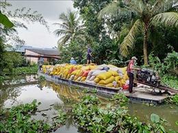 Bạc Liêu đề nghị Hậu Giang và Sóc Trăng hỗ trợ để thu hoạch lúa Hè Thu