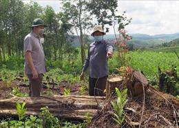 Chủ tịch UBND tỉnh Phú Yên kiểm tra hiện trường, chỉ đạo điều tra các vụ phá rừng