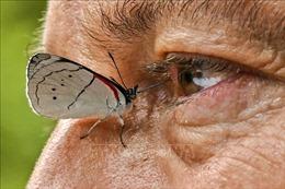 Theo chân nhà sưu tầm danh tiếng về các loài bướm ở Colombia