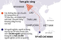 Số lượng ma túy thu giữ tại TP Hồ Chí Minh tăng vọt
