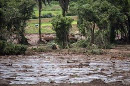 Brazil cấm sử dụng nước sông ô nhiễm sau thảm họa vỡ đập