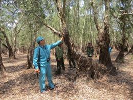 Báo động cháy nguy hiểm tại Vườn quốc gia Tràm Chim