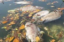 Cá chết hàng loạt gây ô nhiễm nghiêm trọng tại Bảo Lộc, Lâm Đồng