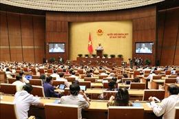 Thảo luận dự kiến Chương trình giám sát của Quốc hội năm 2020