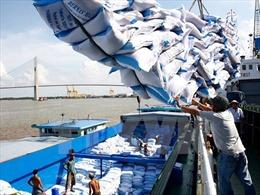 Giá gạo Việt Nam và Thái Lan khó cạnh tranh với Ấn Độ